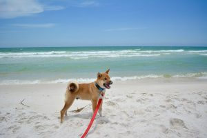 How To Keep Your Dog Safe When Going To Beach